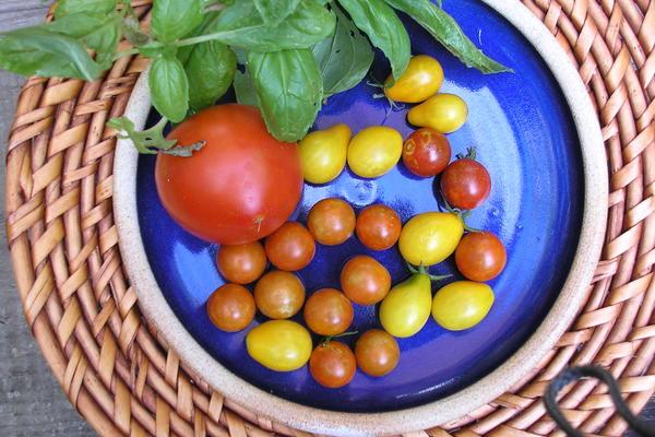 tomatoes 1537484
