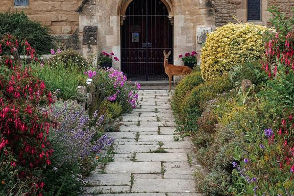 Image of cottage garden path leading up to a church entry with a small deer standing next to the gated arch