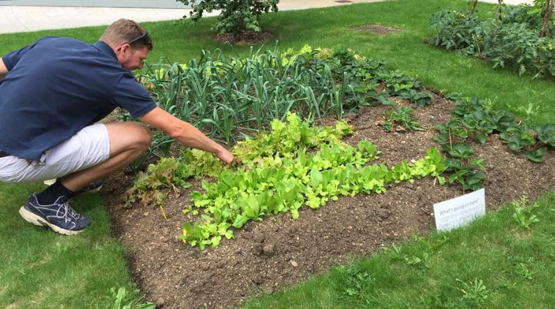 Edible growing plot