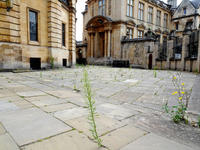 Image of path outside Sheldonian Theatre, weeds are growing through the pavement.