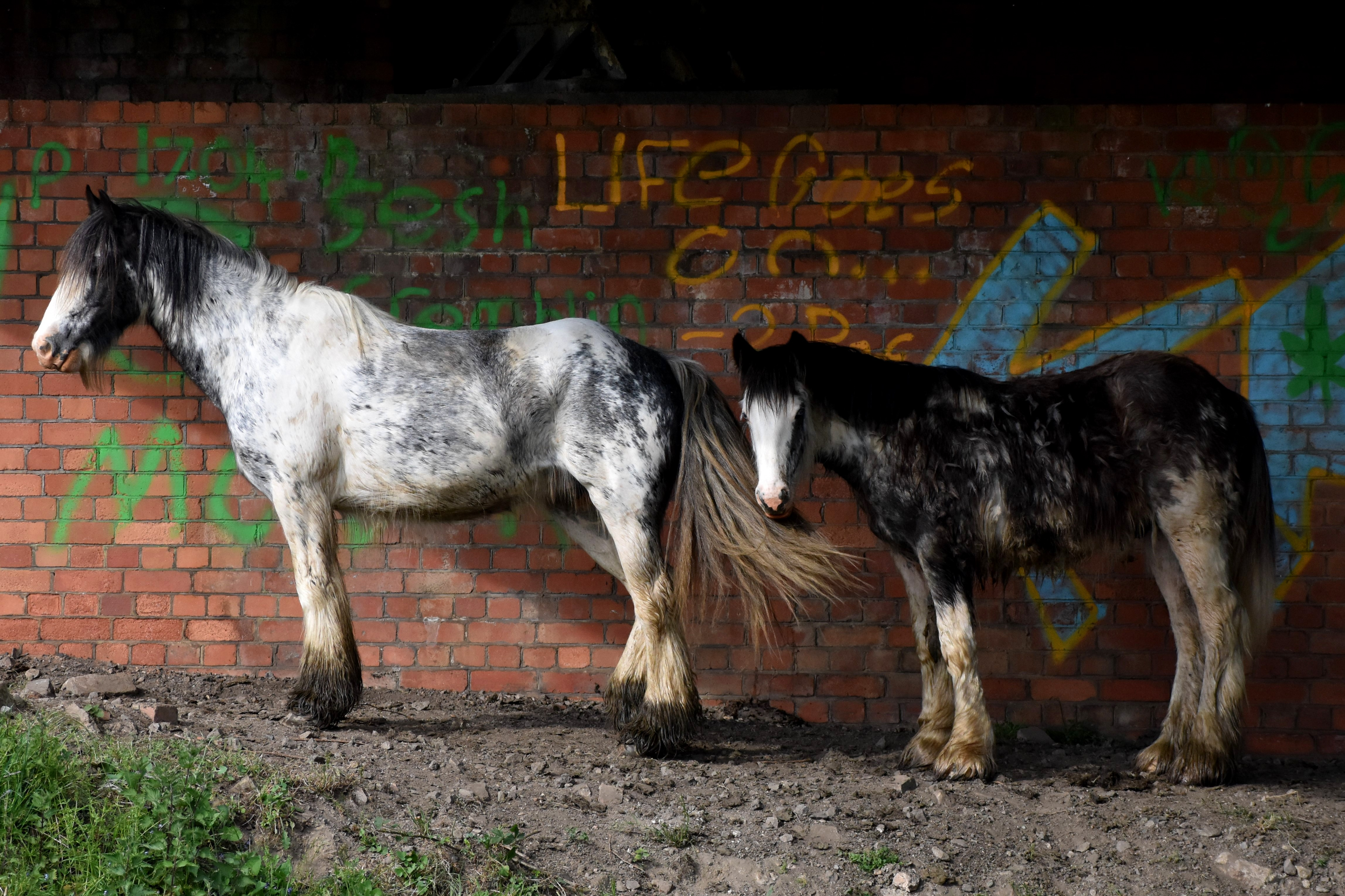Photo of two ponies in an underpass with 'Life goes on' graffitied on wall behind